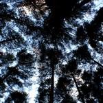 Por los ojos de los árboles – Silvia Bastasini
