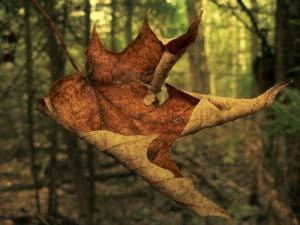 Las hojas no caen, se sueltan.