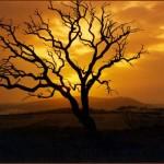 Paisaje del sueño de un árbol, de Reverón