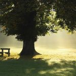 """Ejercicio literario I. """"El árbol, la sombra y el banco"""": cinco poemas de los lectores"""