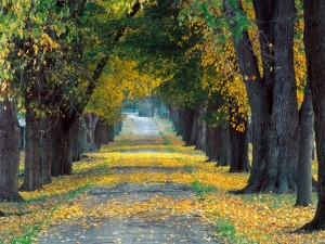 camino_entre_los_arboles