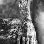 Huesos de la memoria / Pergeñando olvidos (poemario-imagen poética)