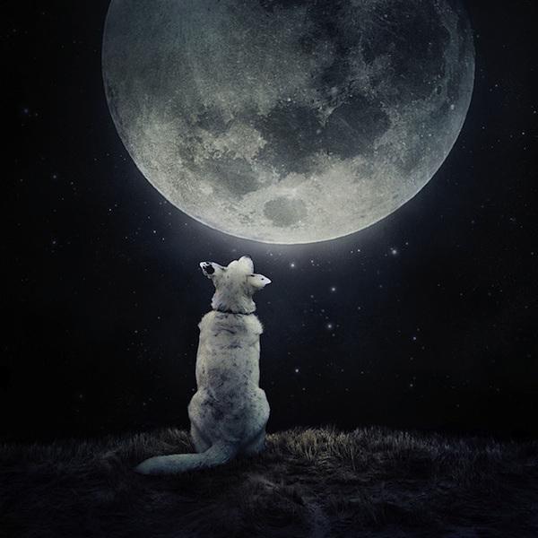 perro-pensamiento-del-dia
