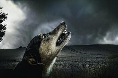 perros_aullan